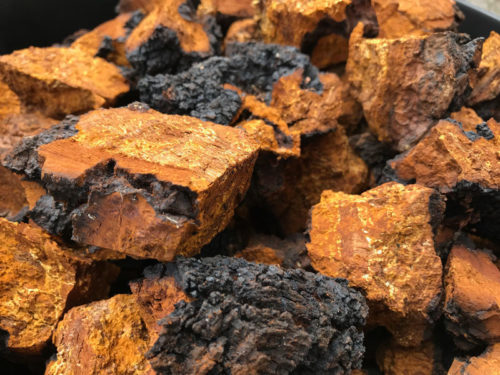 ADK Chaga Mushrooms