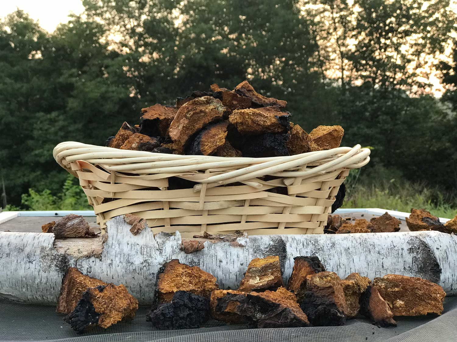 ADK Chaga from the Adirondack Mountains